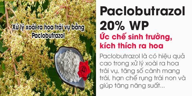 Bán Paclobutrazol 20% WP (Ức chế sinh trưởng, kích thích ra hoa)