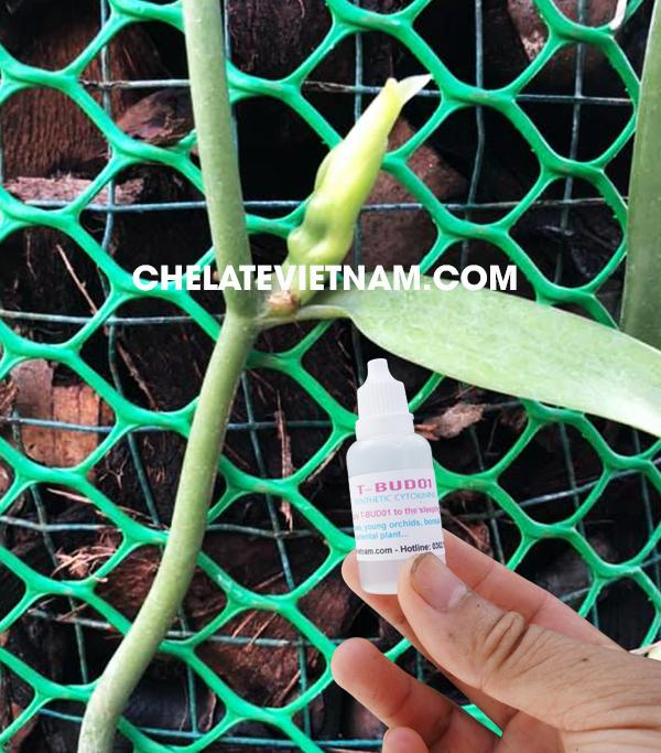 Hình ảnh Lan Vani của anh Nguyễn Hoài Nam (Nha Trang, Khánh Hòa) sử dụng kích Kie T-BUD 01
