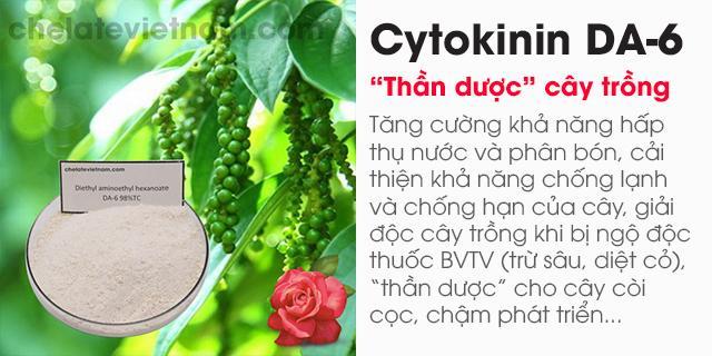 Cytokinin DA6 98% (Tăng cường sức khỏe cây trồng)