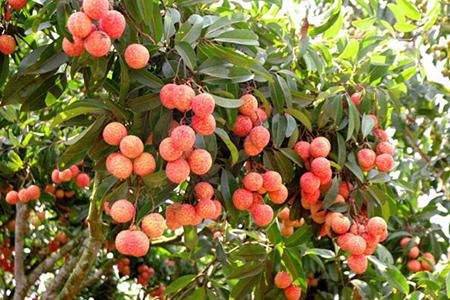 Để cây phát triển tốt, đạt năng suất cao không nên bỏ qua Cytokinin DA-6