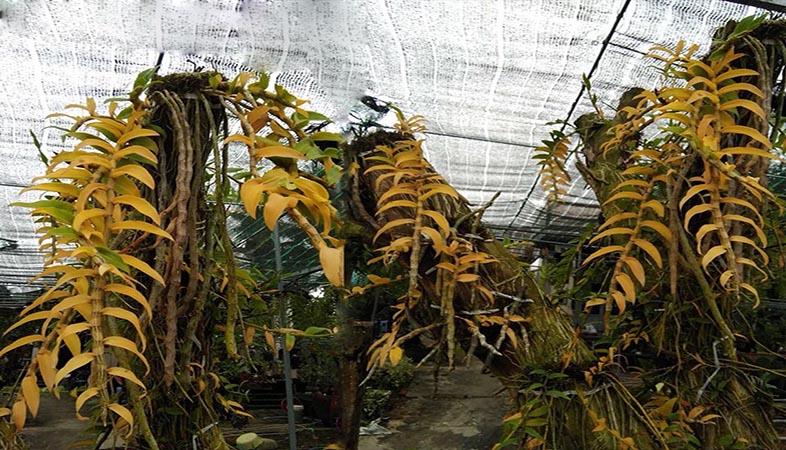 Phương ấn giải độc cho cây trồng, điều nhiều nhà vườn đang cần hướng đến