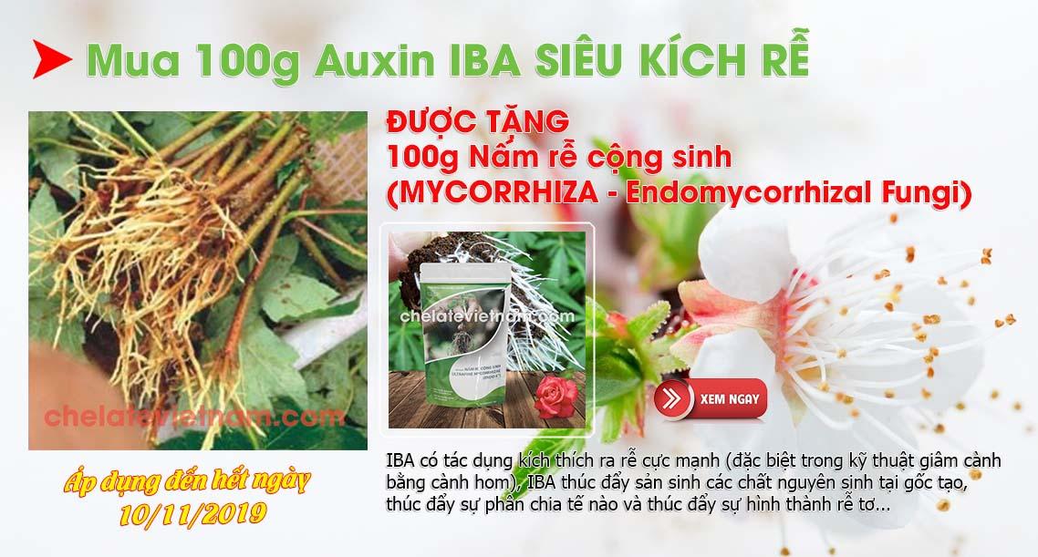 Mua 100 Auxin IBA Siêu kích rễ được tặng 100g nấm rễ cộng sinh (MYCORRHIZA - Endomycorrhizal Fungi)