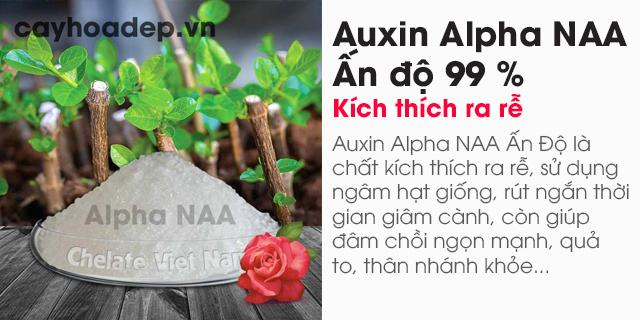 Bán Auxin Alpha NAA Ấn độ 99% (Chất kích thích ra rễ)
