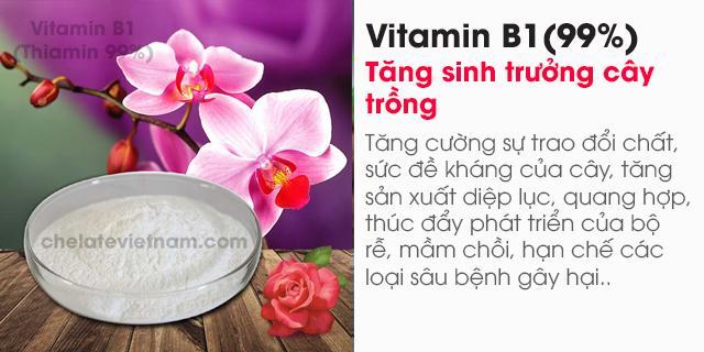 bán Vitamin B1 (Thiamin 99%) nguyên chất (Tăng sinh trưởng cây trồng, vật nuôi)