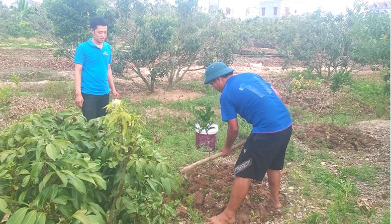 Chelate Việt Nam hướng dẫn sử dụng Compound Nitrophenolate phục hồi sức sống cho cây bưởi bị còi cọc tại Bắc Giang