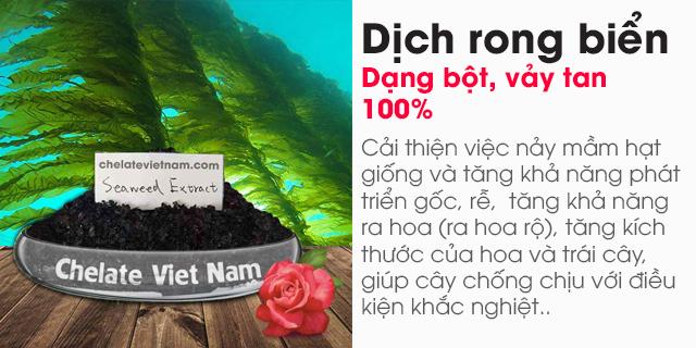 Bán Bột rong biển (Seaweed extract powder) dạng bột, vảy tan 100%