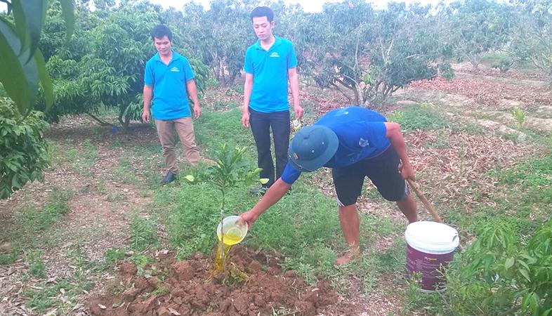 Chelate Việt Nam hướng dẫn sử dụng Compound Nitrophenolate phục hồi sức sống cho cây bưởi bị còi cọc