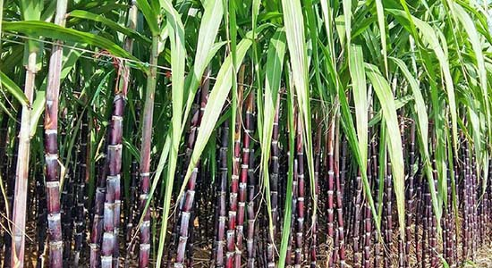 Để cây trồng có thể phát triển nhanh và đạt hiệu quả cao thì không thể bỏ qua bột rong biển