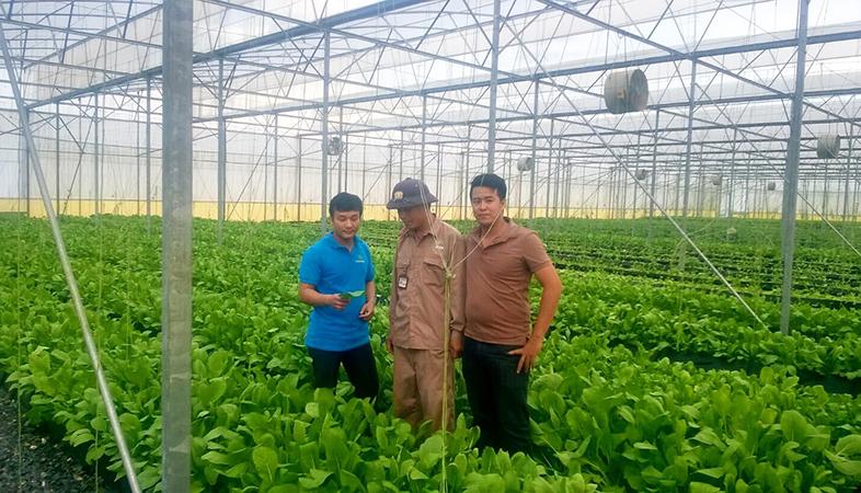 Chelate Việt Nam thăm và tư vấn sử dụng dinh dưỡng vi lượng chelate trên cây rau trồng trên giá thể 02