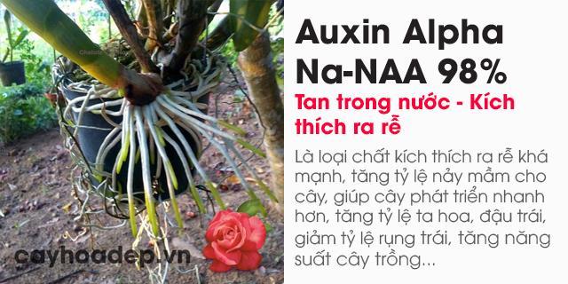 Bán Auxin Alpha Na-NAA 98% tan trong nước (Chất kích thích ra rễ)