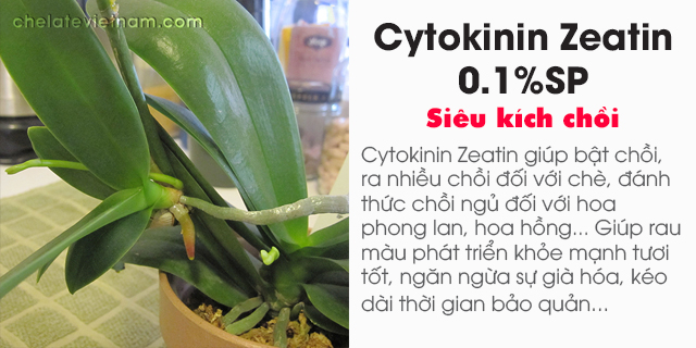 Bán Cytokinin Zeatin 0.1%SP (Siêu kích chồi)
