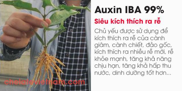 Bán Auxin Indole-3-butyric acid (IBA 99%) (Siêu kích thích ra rễ)