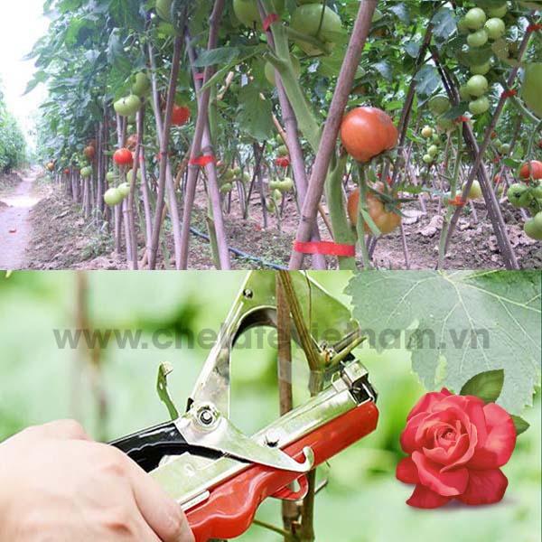 Sử dụng bộ kìm dây cuộn và ghim dây leo cho cà chua