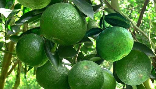 Để cây trồng phát tiển tốt, việc sử dụng Chitosan là điều không thể bỏ qua