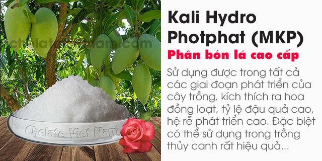 Bán Kali Hydro Photphat (MKP, KH2PO4) bón lá