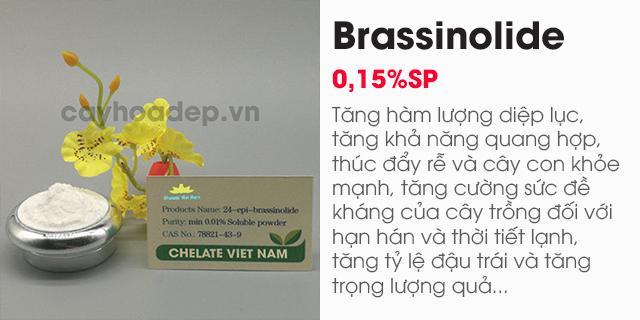 Bán Brassinolide 0.15% SP (Giải độc cây trồng) Hormone thực vật tan trong nước